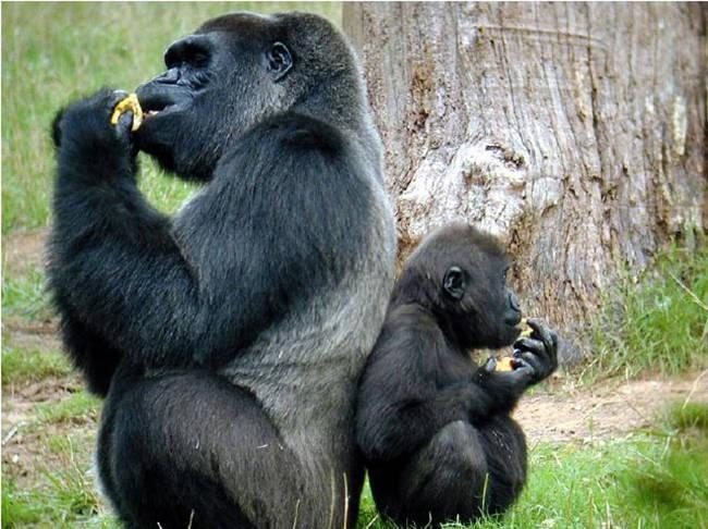 Parents From The Animal Kingdom And Their Adorable Kids - 22 adorable parenting moments in the animal kingdom