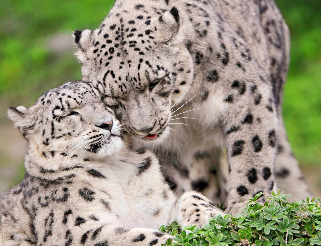 50 Parents From The Animal Kingdom And Their Adorable Kids