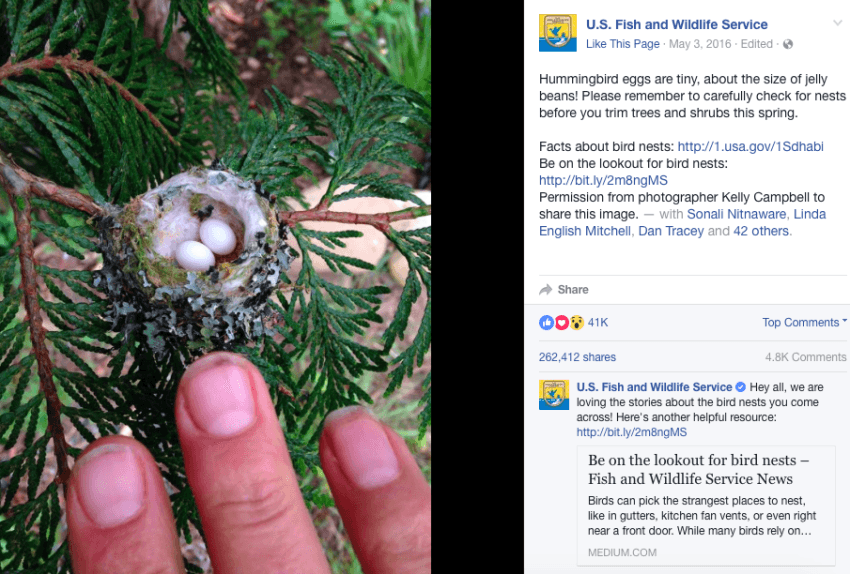 The Experts Issued an Important Notice to Check for Hummingbird Nests