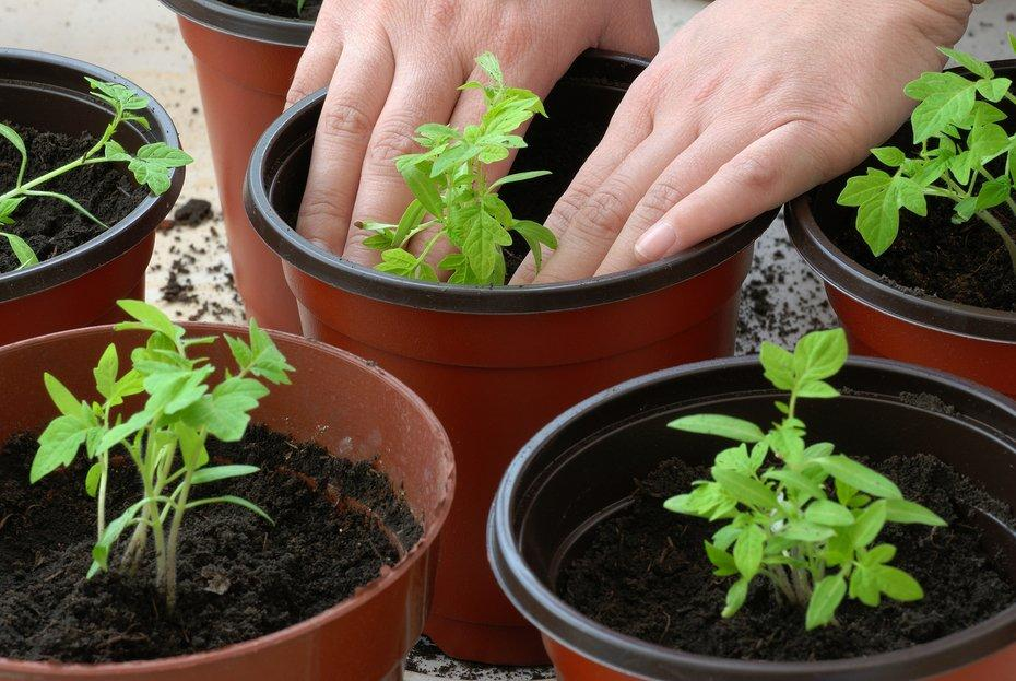 Few Simple Gardening Tricks and Tips You Can Use Today