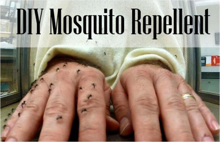 Have A Mosquito Free Summer With These 13 All-Natural And Safe DIY Mosquito Repellents