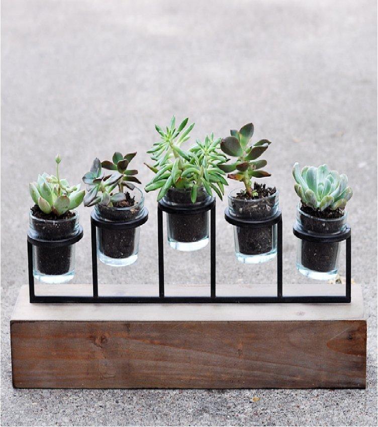 succulent plnters