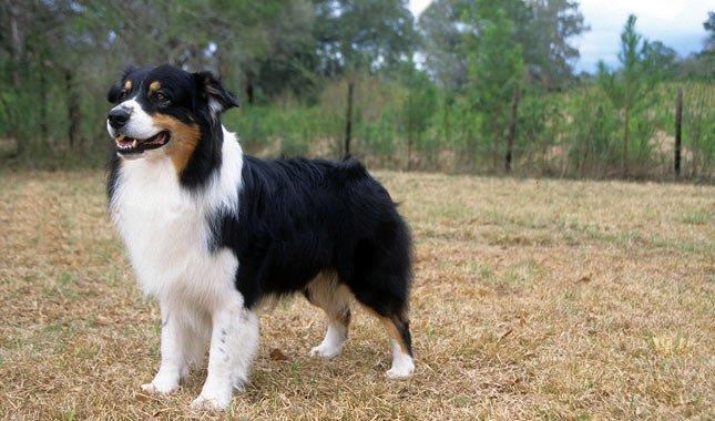 What Dog Breeds Match Your Personality Type?