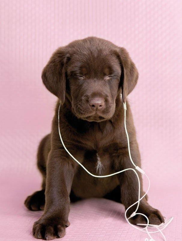 RESEARCH: What Music Makes the Dogs Happy?