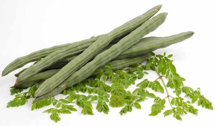 The Moringa Tree: Is This the Cure for Tumor and Diabetes?