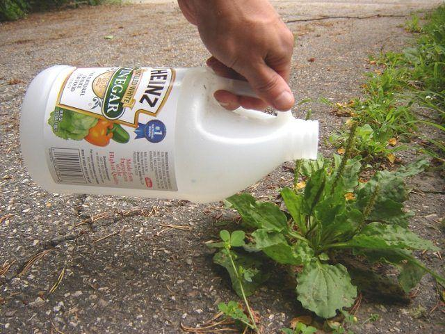 How Can You Use Vinegar in Your Beautiful Garden?