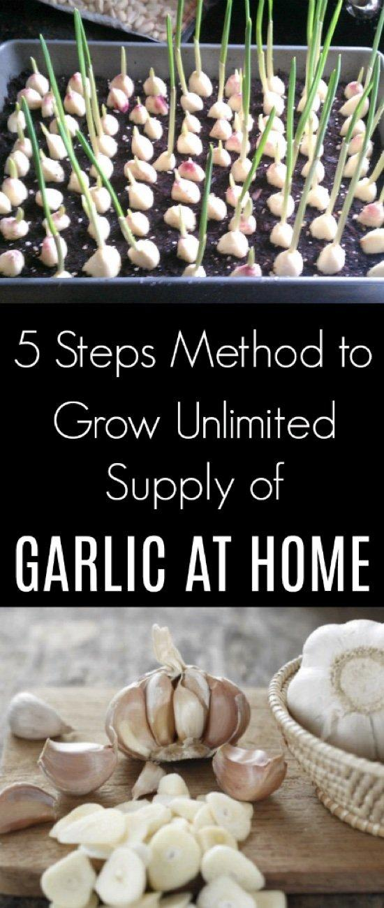 5 Steps Method to Grow Unlimited Supply of Garlic at Home