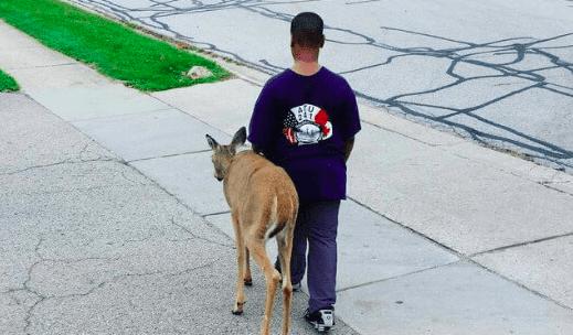 10-Year-Old Walks Blind Deer to Find Food Before School