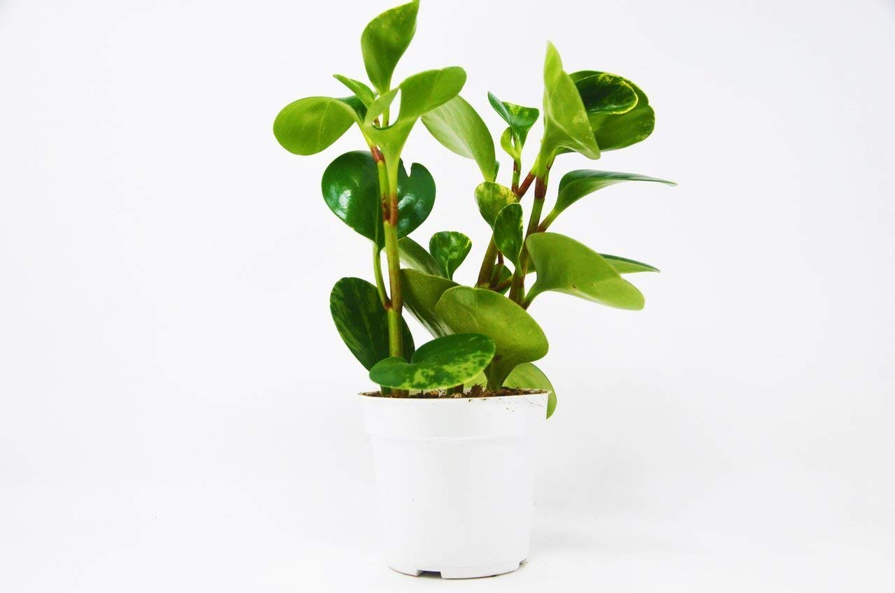 Best Houseplants to Decorate Your Home and Clean the Air