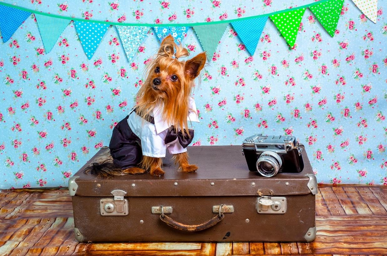 Top 5 Pet Safety Tips While Traveling