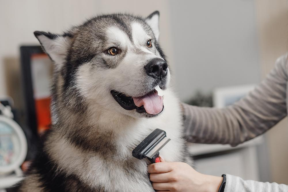 Pet Training: How To Teach Your Dog Simple Tricks At Home