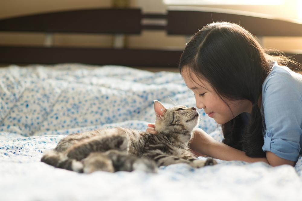 Beautiful asian girl kissing american shorthair cat