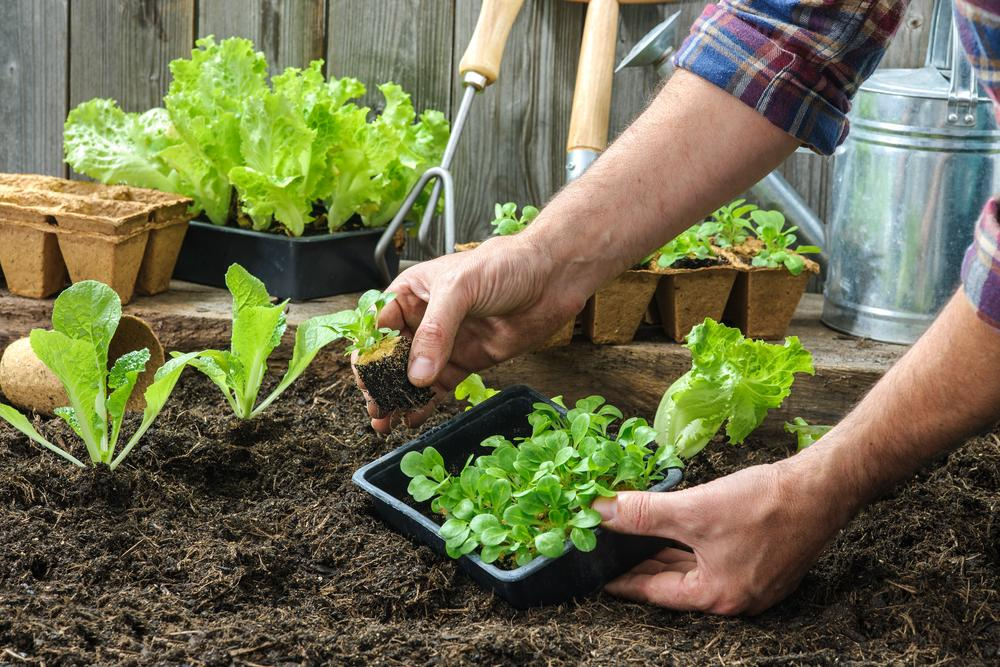 6 Gardening Tips To Transform Small Spaces