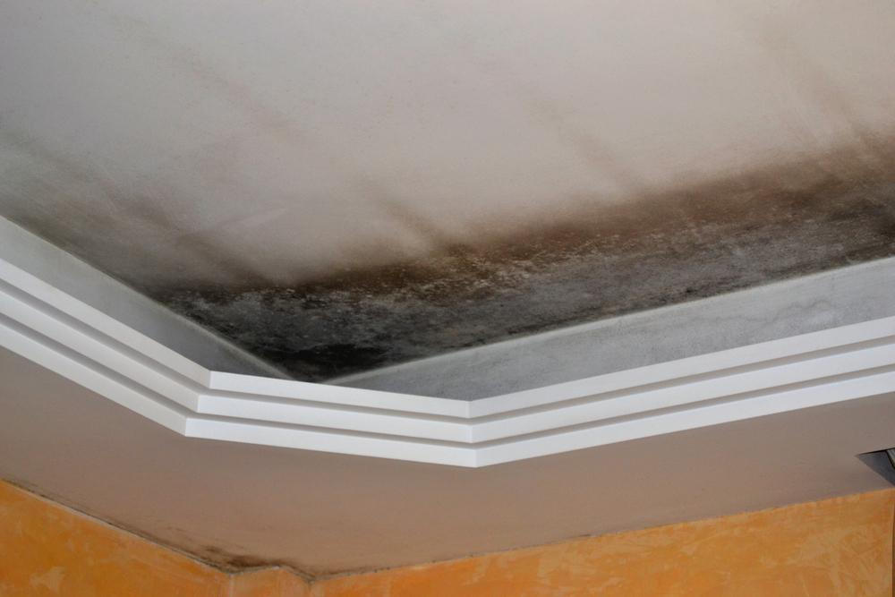 Top Water Damage Clean Up Tips