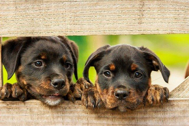 How To Choose The Right Pet For Your Growing Family