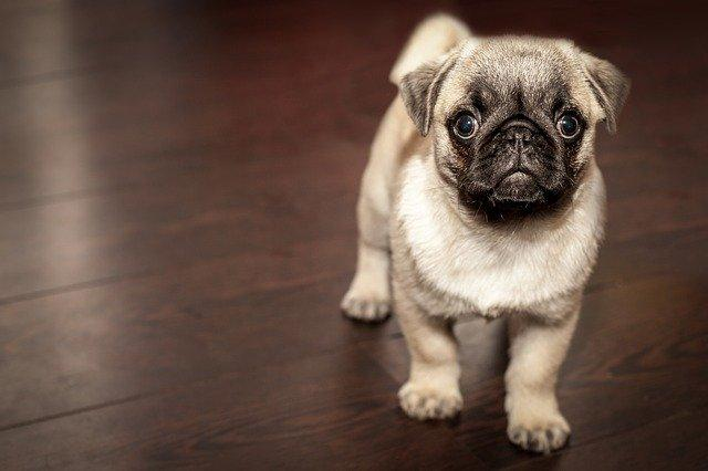 10 Important Ways To Prepare Before Getting A Dog