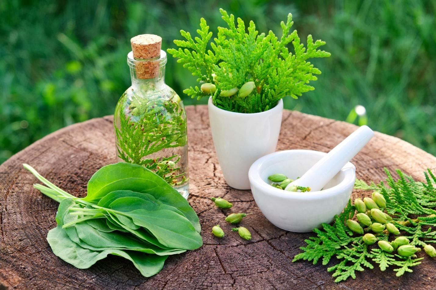 Everything You Need To Know About Herbal Medicine Before Trying